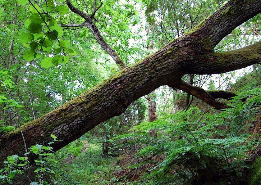 A fallen tree in the woods